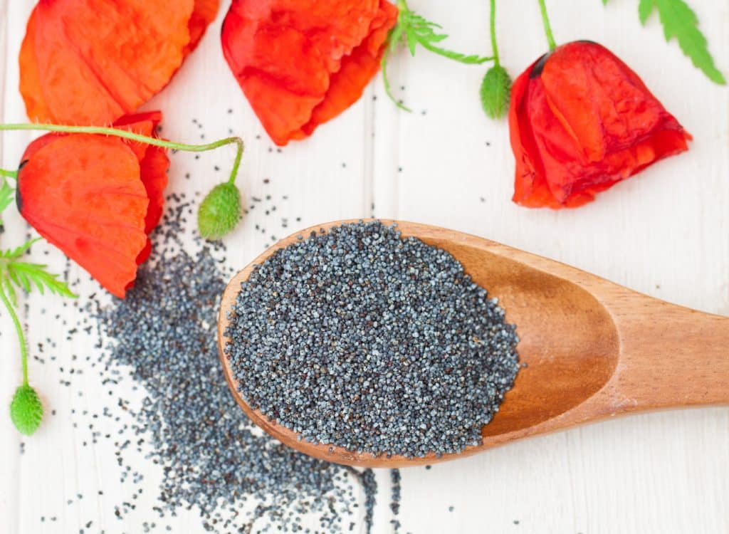 Poppy Seed Blog Image. Image du Blog Graines de Pavot.